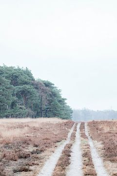 Wanderweg auf der Veluwe-Heide (Teil 2) von Mascha Looije