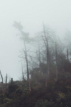 Nebelbäume von Delano Balten