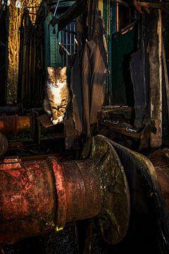 Katze in Bewegung von Rob Boon