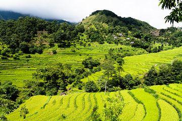 Reisfelder in der nepalesischen Annapurna-Region von Tessa Louwerens