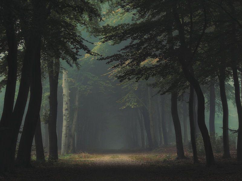 You are my light van Aart Lameris