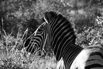 Zebra in schwarz-weiß von Johnno de Jong