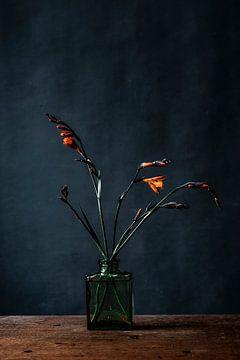 Foto orange Blume gegen dunkelblauen Hintergrund von Jenneke Boeijink