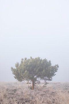 Rust in de mist van Patrick van Os