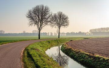 Nackter Baum, der sich in einem Graben spiegelt. von Ruud Morijn