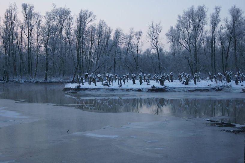 Biesbosch in de winter van Michel van Kooten