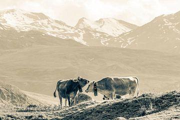 Vaches sur l'alpage en Suisse - Monochrome sur Werner Dieterich