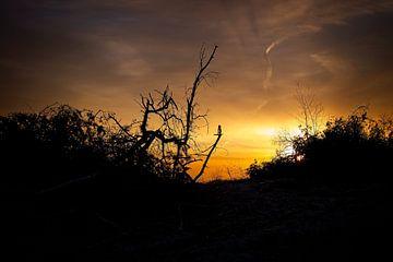 sunrise von Bert Broekhuis