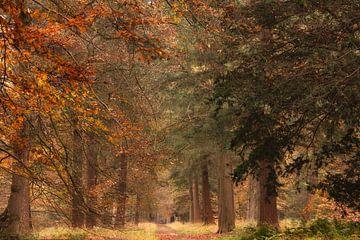 Voie d'automne sur Francis Dost