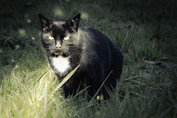 Katze im Licht von Jürgen Neugebauer | createyour.photo