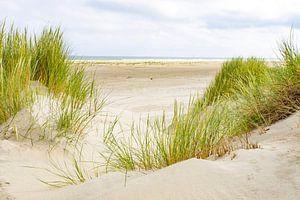 Duinen bij het strand van Terschelling in de zomer