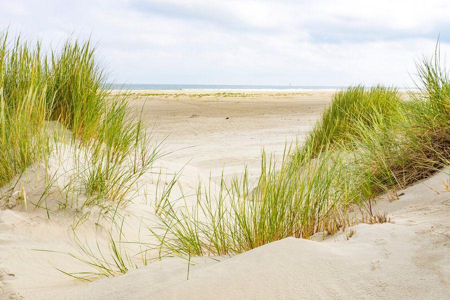 Duinen bij het strand van Terschelling in de zomer van Sjoerd van der Wal