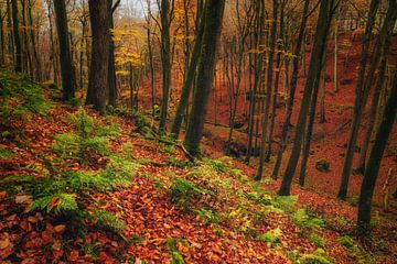 Deep fall van Joris Pannemans - Loris Photography