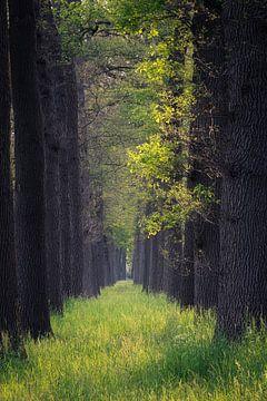 Waldallee aus Gras von Coen Weesjes