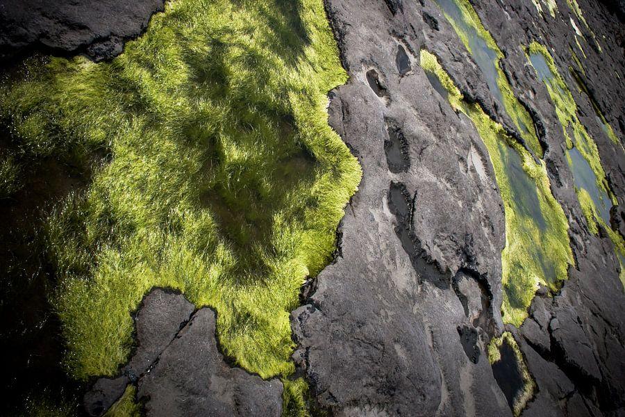 Natures Carpet van Joep Oomen