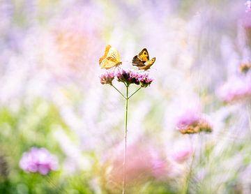 Twee vlinders op een bloem van Thijs van Beusekom