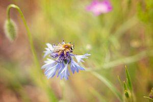 honingbij van Mijke Bressers