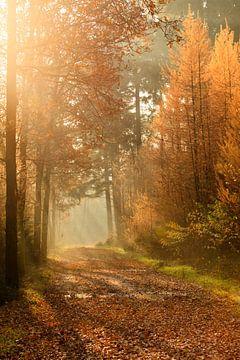 Herfst stralen von Ron ter Burg