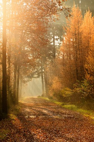 Herfst stralen van