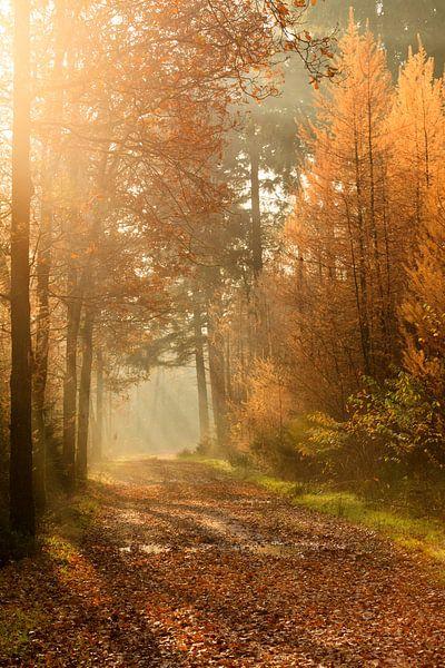 Herfst stralen van Ron ter Burg