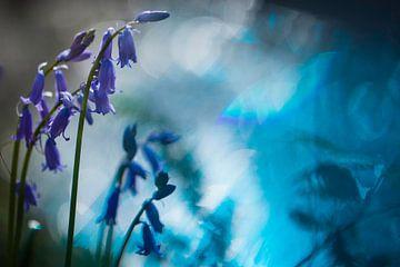 Hyacint in het bos van Arjen Hartog
