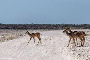 Overstekende kudu's van Sander RB