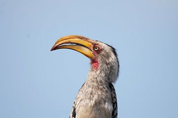 Nashornvogel von Petra Lakerveld