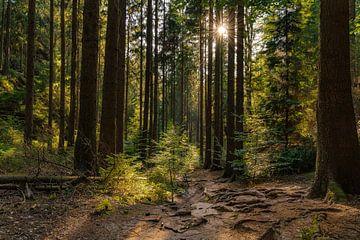 Boswandeling in het Elbsandsteingebergte van Marc-Sven Kirsch