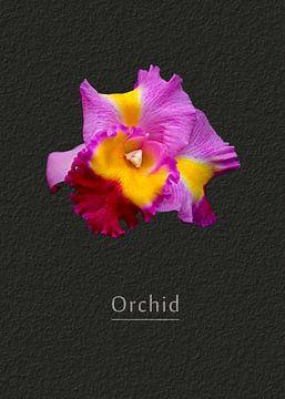 Orchid van Leopold Brix