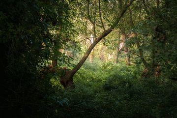 Oude wegen, nieuw licht van Kristoff De Turck
