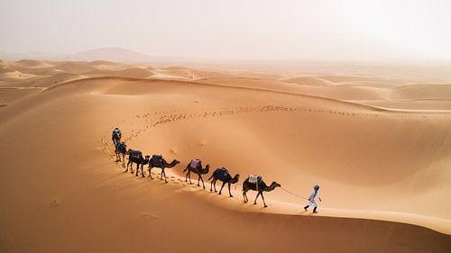 Kamelen in de woestijn van Hollandse Hoogte