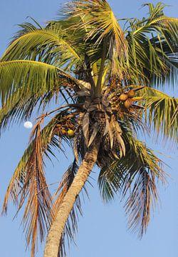 Palmtree van Marian Kramer