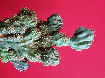 Kamerplant: SciFi Cactus 3-2 van MoArt (Maurice Heuts)
