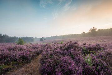 Bloeiende Heide van Max ter Burg Fotografie