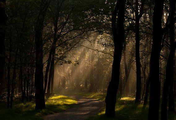 Mystical forest van Hans Koster