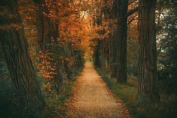Herfst Vibes van Joris Pannemans - Loris Photography