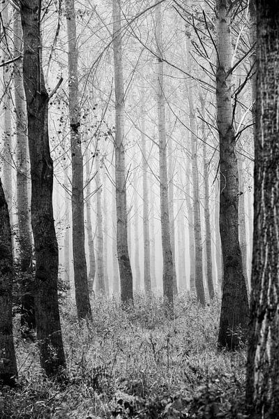 Mystiek lijnenspel in het bos van Margreet Piek