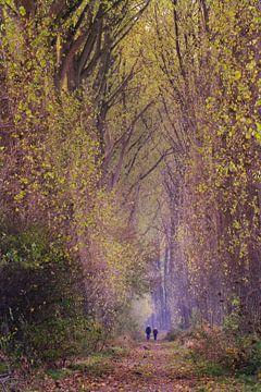 feeling small....herfstwandeling door de mooie lanen in de Zak van ZuidBeveland von Els Fonteine