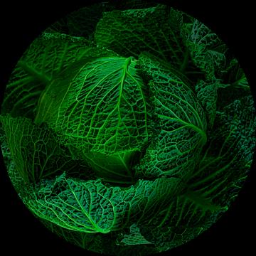 Stilleven 'groene kool' van Willy Sengers
