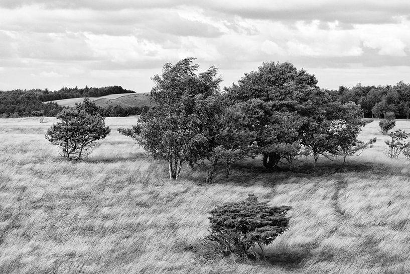 Landschap met bomen en wuivend gras (Denemarken) van Tot Kijk Fotografie: natuur aan de muur