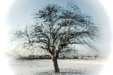 winterse boom van Guido Rooseleer