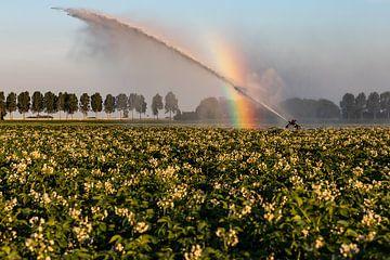 Aan het einde van de regenboog van Louise van den Broek
