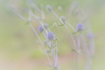 Fleurs dans le champ sur Leo Luijten