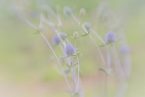 Blauwe bloemetjes in het veld met een rustige pastelkleurige achtergrond van