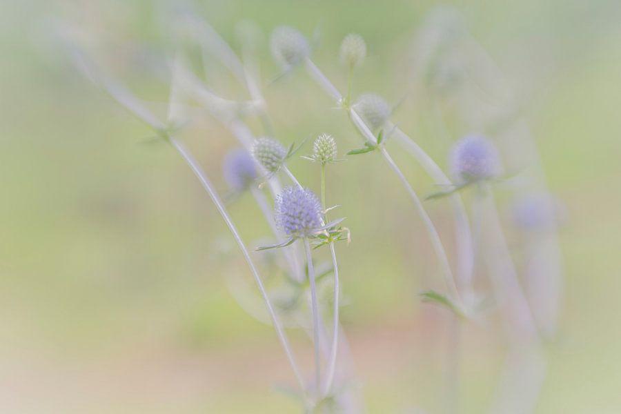 Blauwe bloemetjes in het veld met een rustige pastelkleurige achtergrond van Leo Luijten