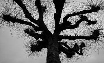 Baum in schwarz und weiß von Wouter Bos