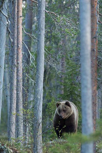 Bruine beer van Erik van Velden