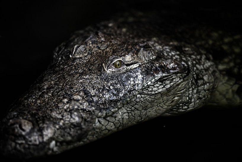 Het portret van een krokodil van Steven Dijkshoorn