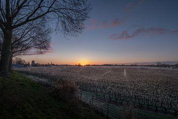 Beregenen fruitbomen in Beesd van Moetwil en van Dijk - Fotografie