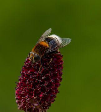 bloem met insect tuindoek van Evelien van der Horst